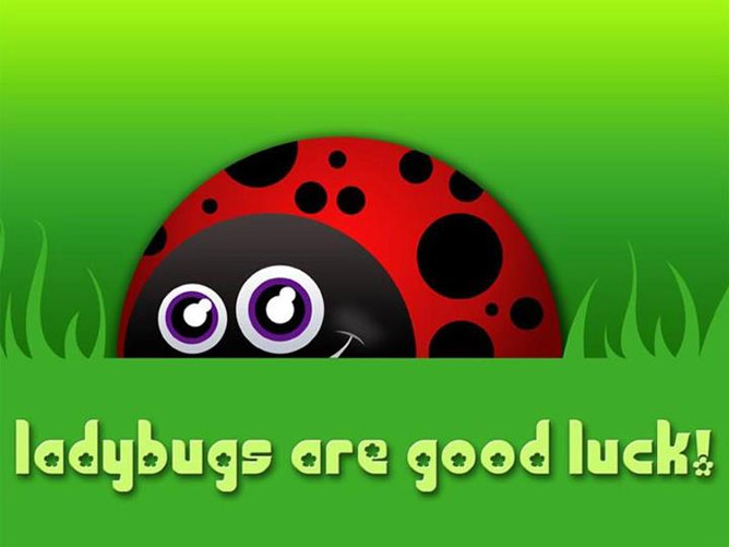 Ladybugs are Good Luck